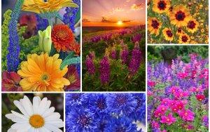 Женщина лето: определяем цветотип внешности и создаём неповторимый образ