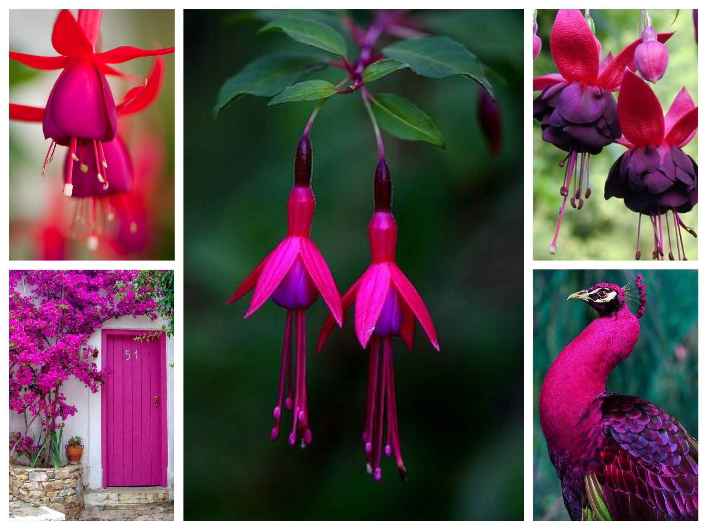 Цветы цвета фуксии