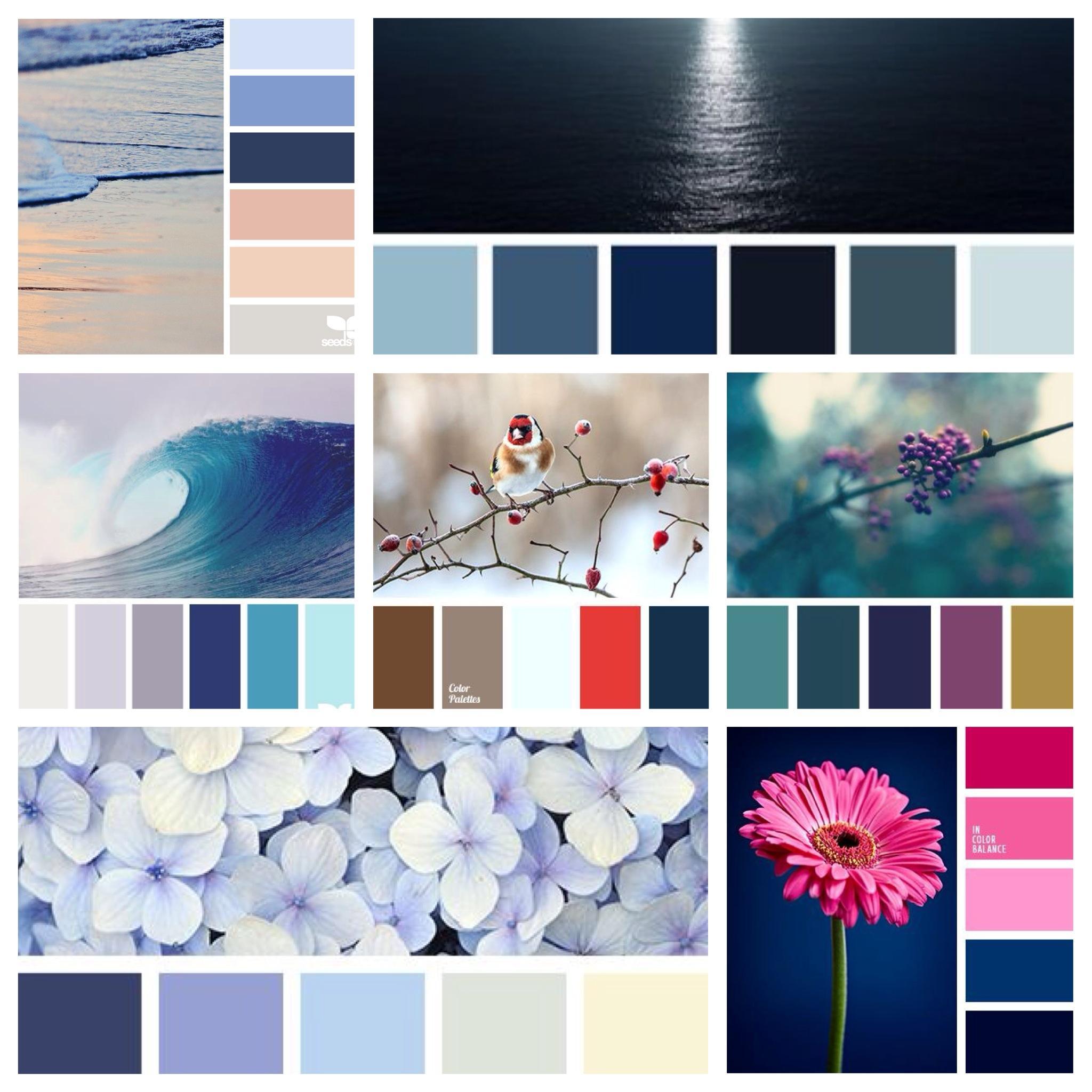 зайти сочетание цветов в картинках синий сковороде