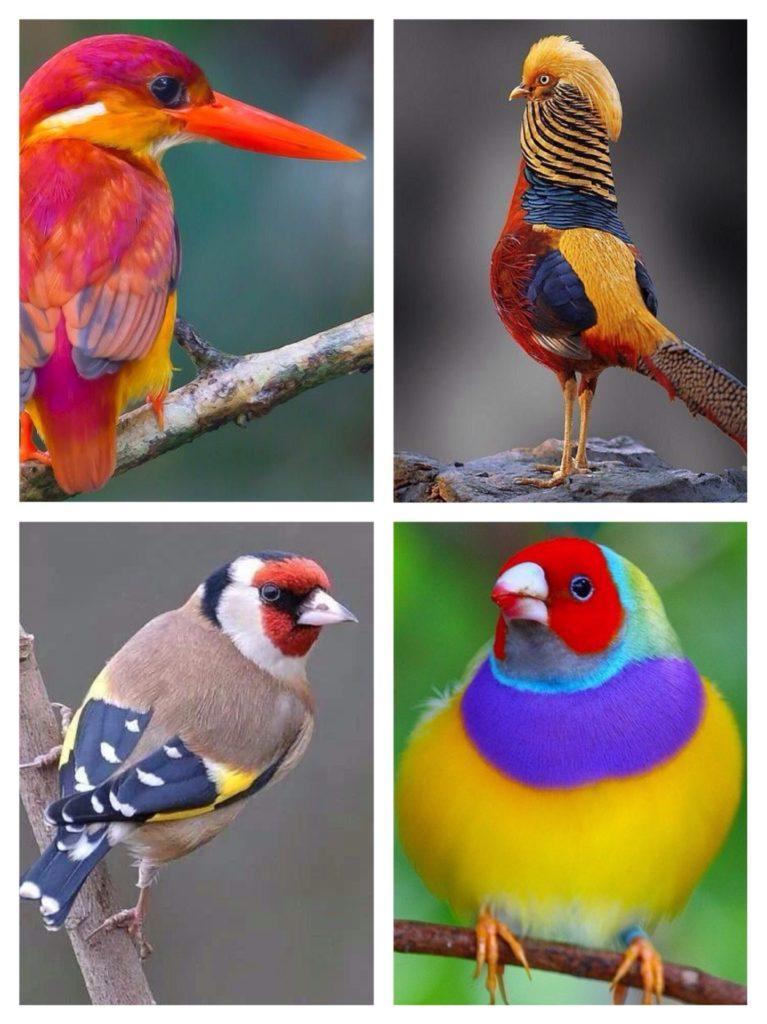 необычные сочетания цвета в природе