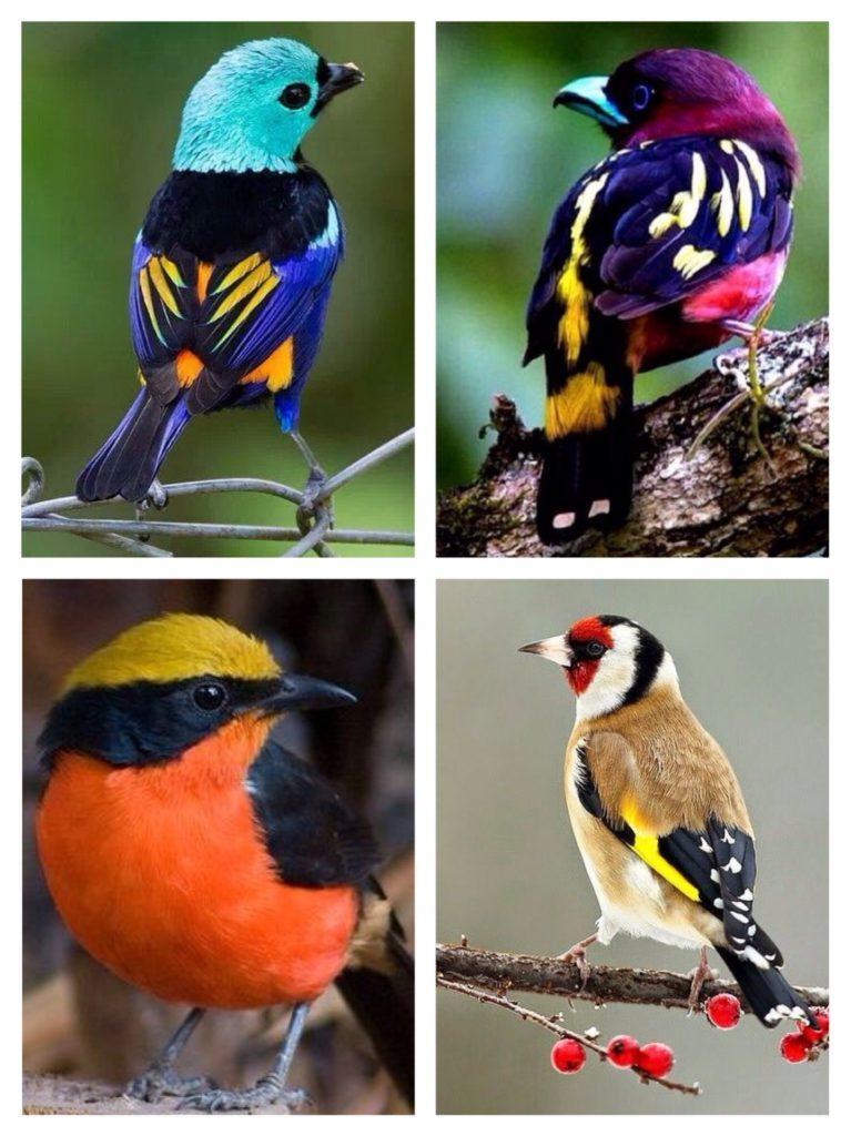 сочетание ярких цветов в природе